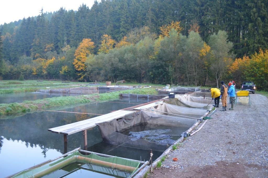Abbildung 14: Sonntag früh morgens in der Hälteranlage, bevor es an das Verladen unserer Fische ging