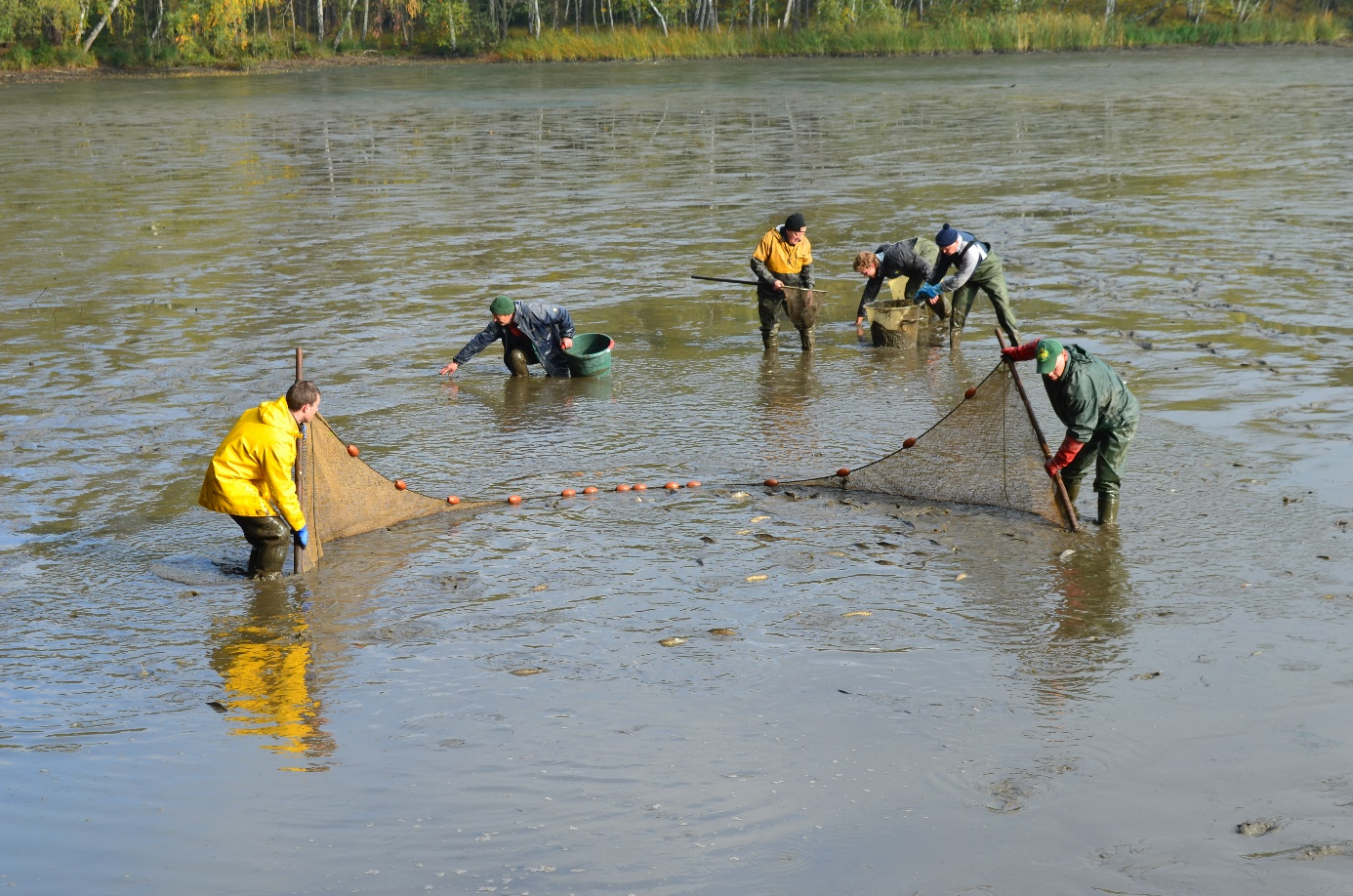 Fischereiverein meckelfeld gl singen e v bericht for Welche fische im teich